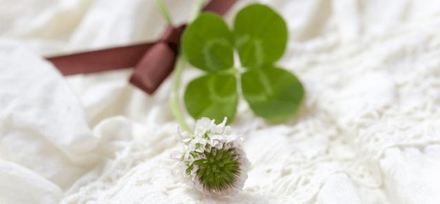 clover0829